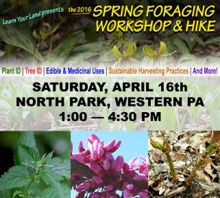 springforaging2